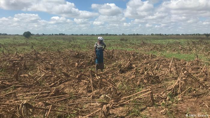 Mosambik l nach dem Zyklon l Keine Ernte, kein Essen (DW/A. Kriesch)
