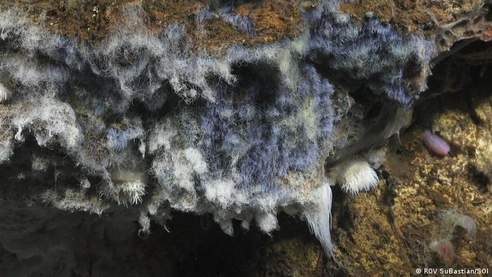 Bacteria in the deep sea at Pescadero Basin (ROV SuBastian/SOI)