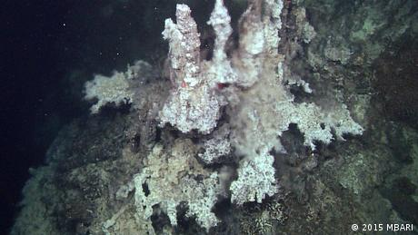 thermal vents in the sediment of Pescadero Basin (2015 MBARI)