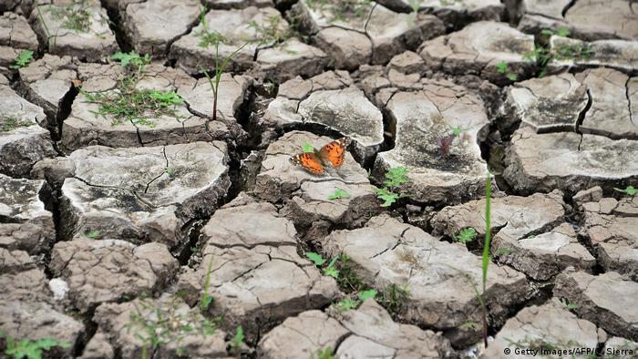 Leptir je izabrao baš ovo mjesto za svoj kratak život - na suhom tlu rezervoara Los Laureles u Tegusigalpi, glavnom gradu Hondurasa. Odavdhe stiže više od 50 odsto vode za grad sa oko milion stanovnika. Međutim, trenutno vlada izrazita suša. Suho tlo je lijepo za leptira, ali loše za ljude.