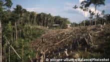 Brasilien Rodungen im Tropischen Regenwald