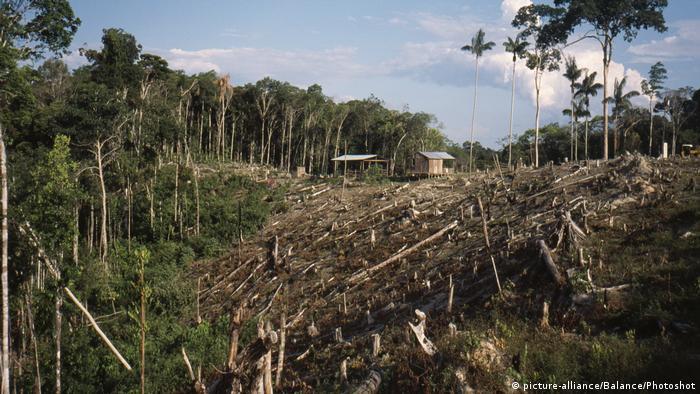 Aárea de floresta primária alvo de exploração ilegal de madeira na Amazônia