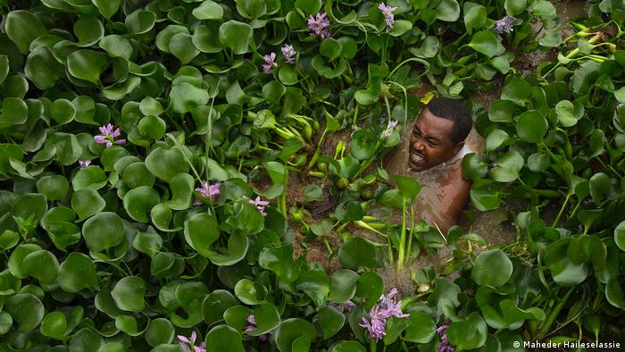A man pushing through water hyacinth, an invasive aquatic plant that is a major threat to the existence of, and biodiversity within, Lake Tana, Ethiopia (Maheder Haileselassie)