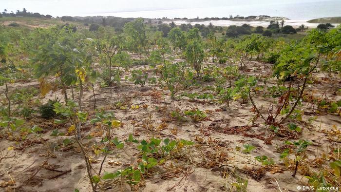 Mosambik | Anbaugebiete in Agoche, Provinz Nampula