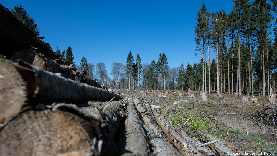 Germany's forests decimated by insects, drought   DW   27.07.2020