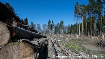 Deutschland Wald Dürre Frühling