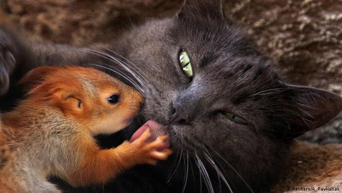 BdTD Katze adoptiert Eichörnchen-Babys (Reuters/A. Pavlishak)