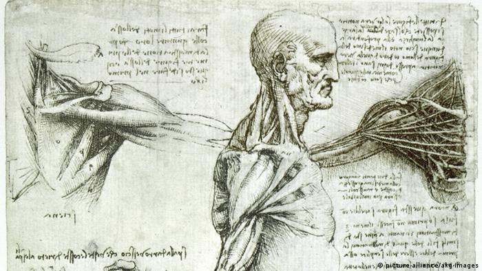 Desenhos do corpo humano por Leonardo da Vinci