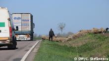 Rumänien - Straßeninfrastruktur: Schafe auf nationalen Straßen