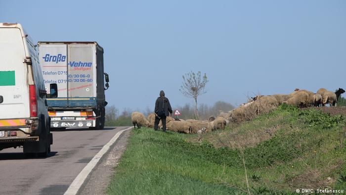 Drum naţional cu TIR-uri şi oi (DW/C. Ştefănescu)