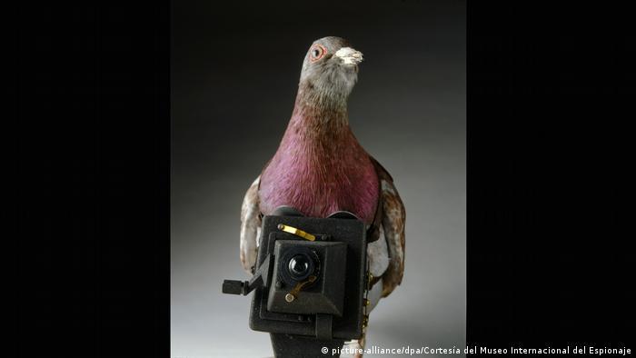 Taube mit Kamera (picture-alliance/dpa/Cortesía del Museo Internacional del Espionaje)