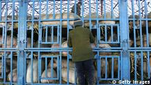 Schweinezucht in China