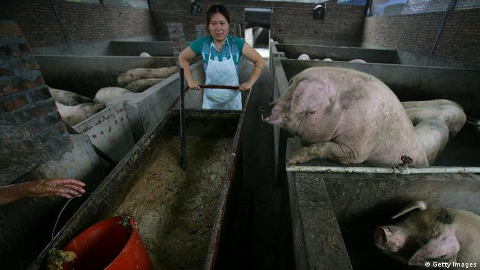 Schweinezucht in China (Getty Images)