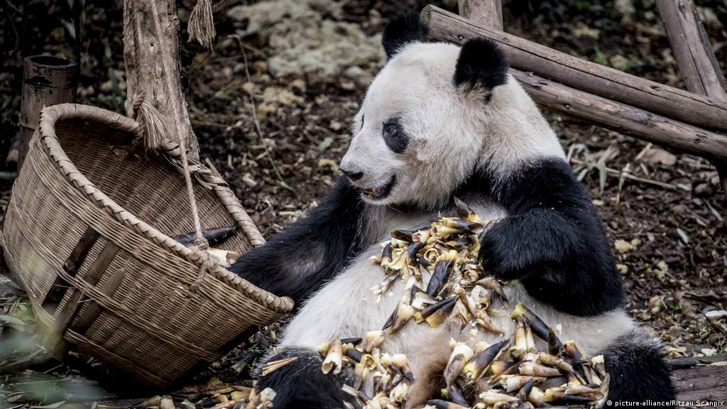 Man-Eater Bears Fighting for Your Life