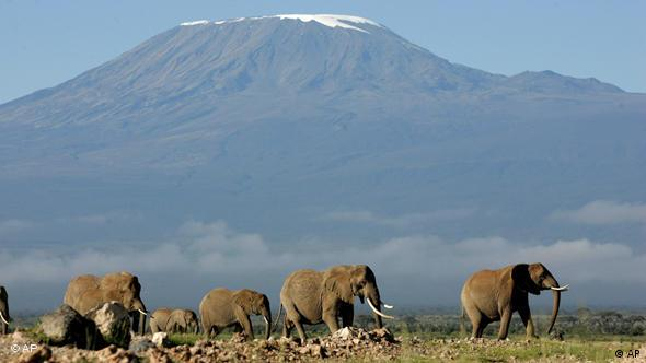 Elephants in front of the Kilimanjaro mountain range in Africa
