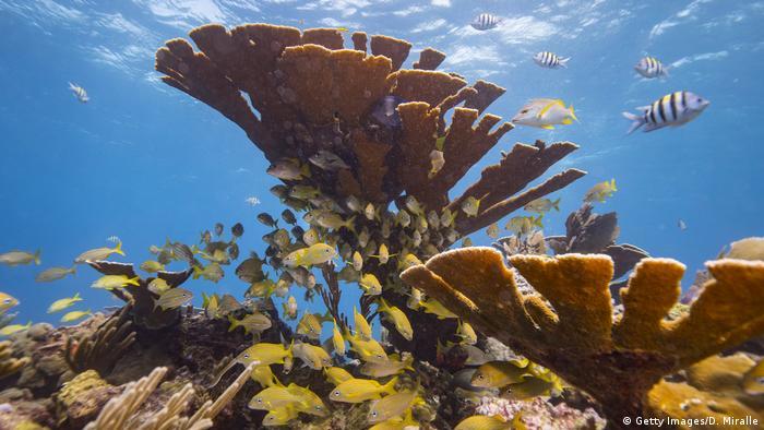 Colorful fish swim in coral reef.