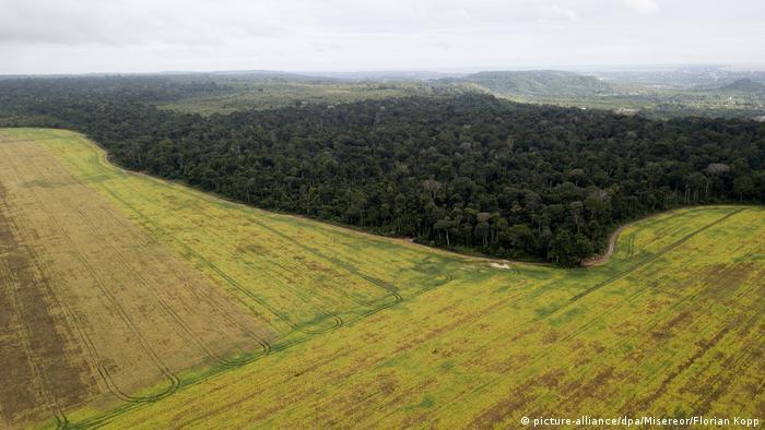 Wie Soja Brasiliens Regenwald in Gefahr bringt (picture-alliance/dpa/Misereor/Florian Kopp)