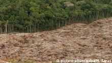ARCHIV - 03.06.2008, Brasilien, Amazonas: Abholzung des Regenwalds im Amazonasgebiet in Brasilien. Wegen des Handelskriegs mit den USA kauft China immer mehr Soja aus Brasilien. Aber die Bohne braucht Platz. Forscher fürchten, dass im Amazonasgebiet eine Fläche von der Größe Griechenlands abgeholzt werden könnte, um den chinesischen Soja-Hunger zu stillen. Foto: Marcelo Sayao/EFE/dpa +++ dpa-Bildfunk +++ |