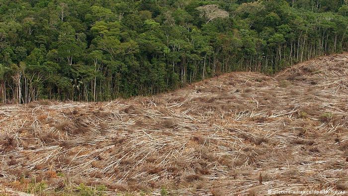 Desmatamento na Amazônia em áreas preservadas cresce 40%