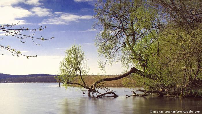 A lake with tree trunks falling into the water (Foto: michaelstephan/stock.adobe.com).