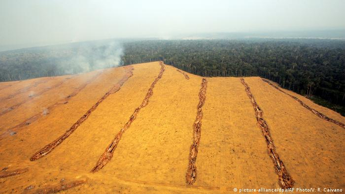 Large fields of soy are seen near the city of Santarem in the Brazilian state of Para