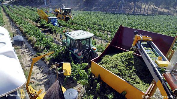 Vineyard in Catalonia, Spain