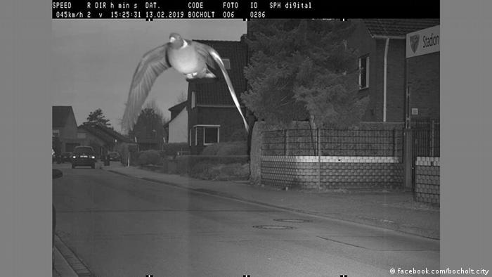 Pigeon caught by speed camera in Germany | News | DW | 08 05 2019