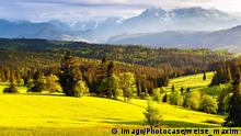 Symbolbild | Natur | Landschaft | Wald | Europa