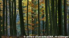 Bunt leuchtet das herbstlich gefärbte Laub der Bäume in einem sonst dunkel scheinenden Wald nahe Stolpe, aufgenommen am 26.10.2007. Foto: Ralf Hirschberger +++(c) dpa - Report+++ | Verwendung weltweit