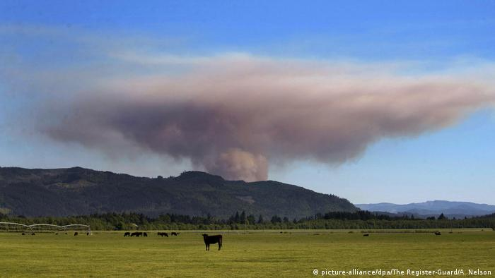 BDTD Waldbrand in Oregon (picture-alliance/dpa/The Register-Guard/A. Nelson)