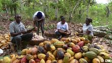 DW Eco Africa - Ghana Kakao