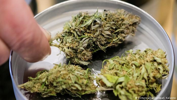 Cannabis Anbau für die Medizin