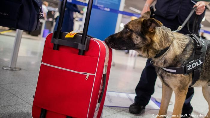 A dog sniffing a red suitcase at an airport