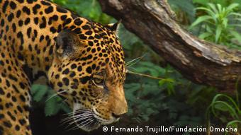 Biodiversität in Venezuela
