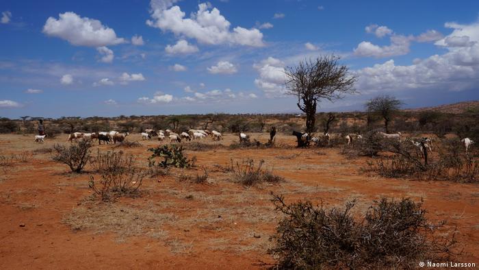 Animals grazing in an arid landscape