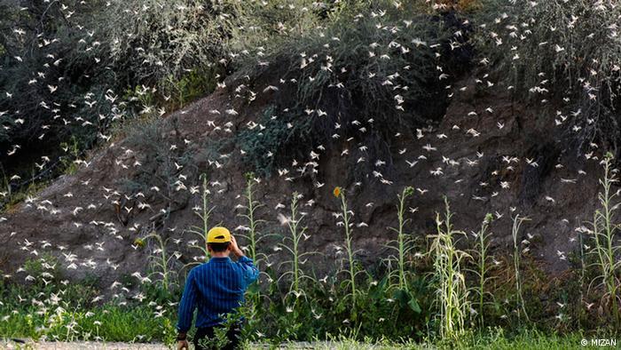 Iran Heuschrecken (MIZAN)