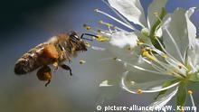 Deutschland Bienen in Berlin