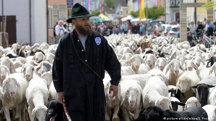 Para el pastor Sascha Gebler, el recorrido a través de la ciudad bávara de Almühltal no es un paseo. La belleza de estos parajes de pastoreo despierta tanta fascinación por la vida campesina y su entorno que muchos citadinos quieren pasar vacaciones allí, e incluso están dispuestos a trabajar gratis en las granjas para volver a sentir la naturaleza.