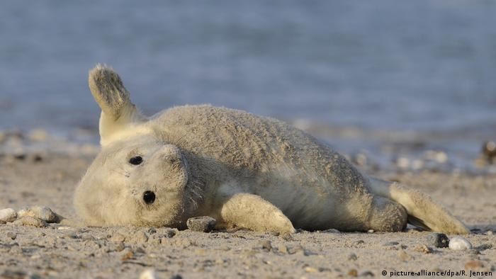 A young seal on its back on a beach