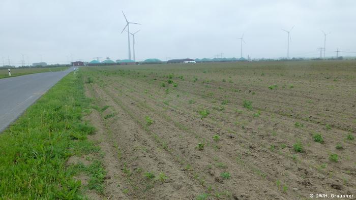 Deutschland Glyphosatbereinigter Acker bei Nauen in Brandenburg (DW/H. Graupner)