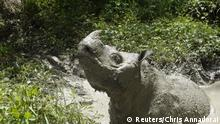 Tam, the last male Sumatran rhino is seen covered in mud in Sabah, Malaysia May, 2014 in this picture obtained from social media on May 27, 2019. CHRIS ANNADORAI/via REUTERS THIS IMAGE HAS BEEN SUPPLIED BY A THIRD PARTY. MANDATORY CREDIT. NO RESALES. NO ARCHIVES.
