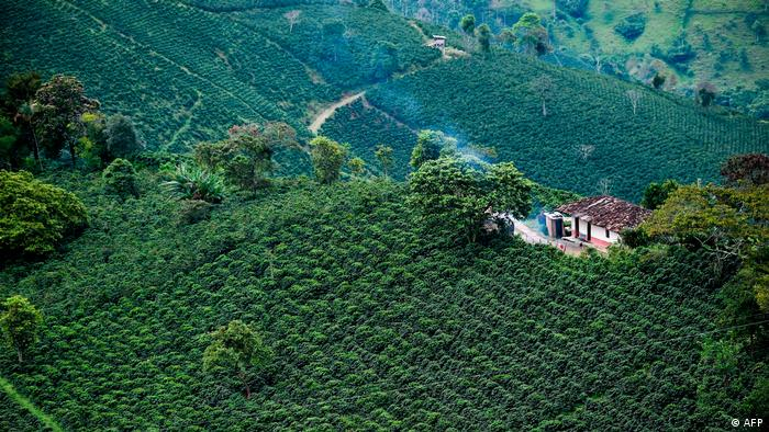La Colombia de los campos. Aquí un cultivo de café en Santuario, Risaralda.