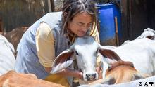 Indien Radhakund Friederike Irina Brüning kümmert sich um Kühe