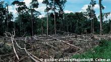Kolumbien Abholzung des tropischen Regenwaldes