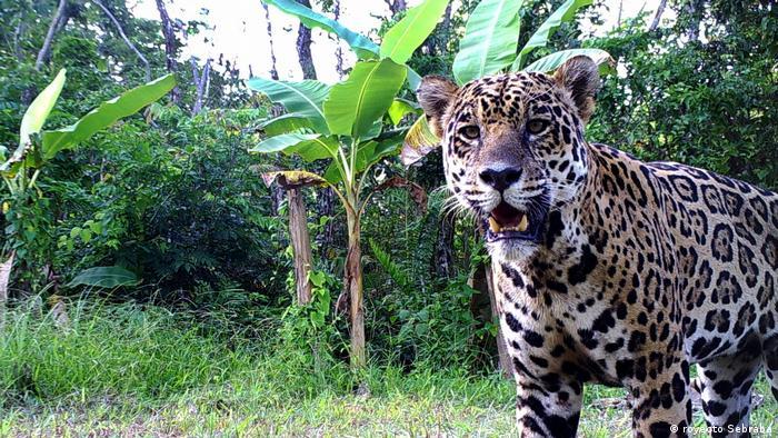 Venezuela | CIT | Forschung und Biodiversität in Venezuela (royecto Sebraba)