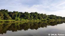 Terra Indigena Xingu, Mato Grosso, 12.05.19+++Regenwald am Ufer des Xingu Fluss. (c) DW/Nádia Pontes