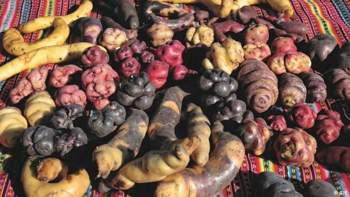 Different potato varieties of various colors