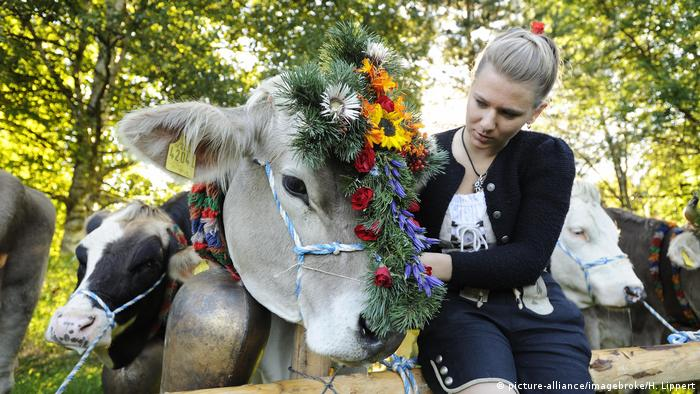 Young woman leads a decorated cow at the Viehscheid cattle drive in Pfronte (picture-alliance/imagebroke/H. Lippert)