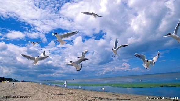 beach, clouds, sea gulls Foto: Peter Hirth/ Transit