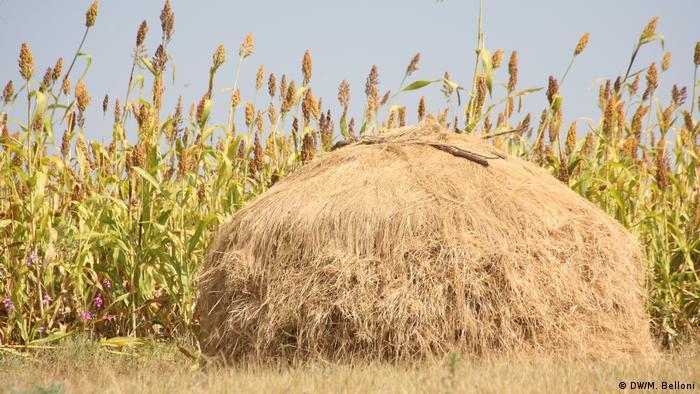 Field in Eritrea